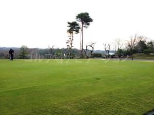 tojo_pine_training_3