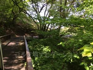 橋を渡る際、下を覗くと綺麗な沢が見えます。