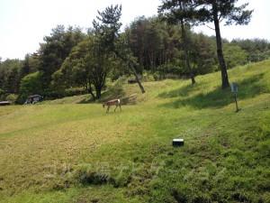 鹿が近くまでやって来た。