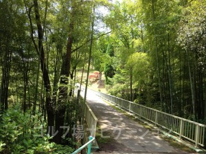 竹林が美しい