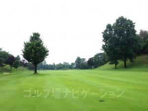 写真左の一本木がティグランドから見えた正面の木。木の右サイドは広い。