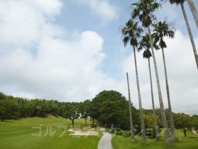 風に強いヤシの木が台風11号で折れてました。