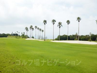 右サイドはヤシの木が並んでいます。奥に見えるのが太平洋とダイワロイヤルホテル。