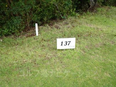 レディスティからの距離は137ヤード